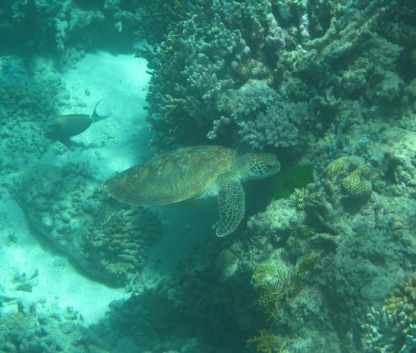 Great Barrier Reef - Under Water World 8/18