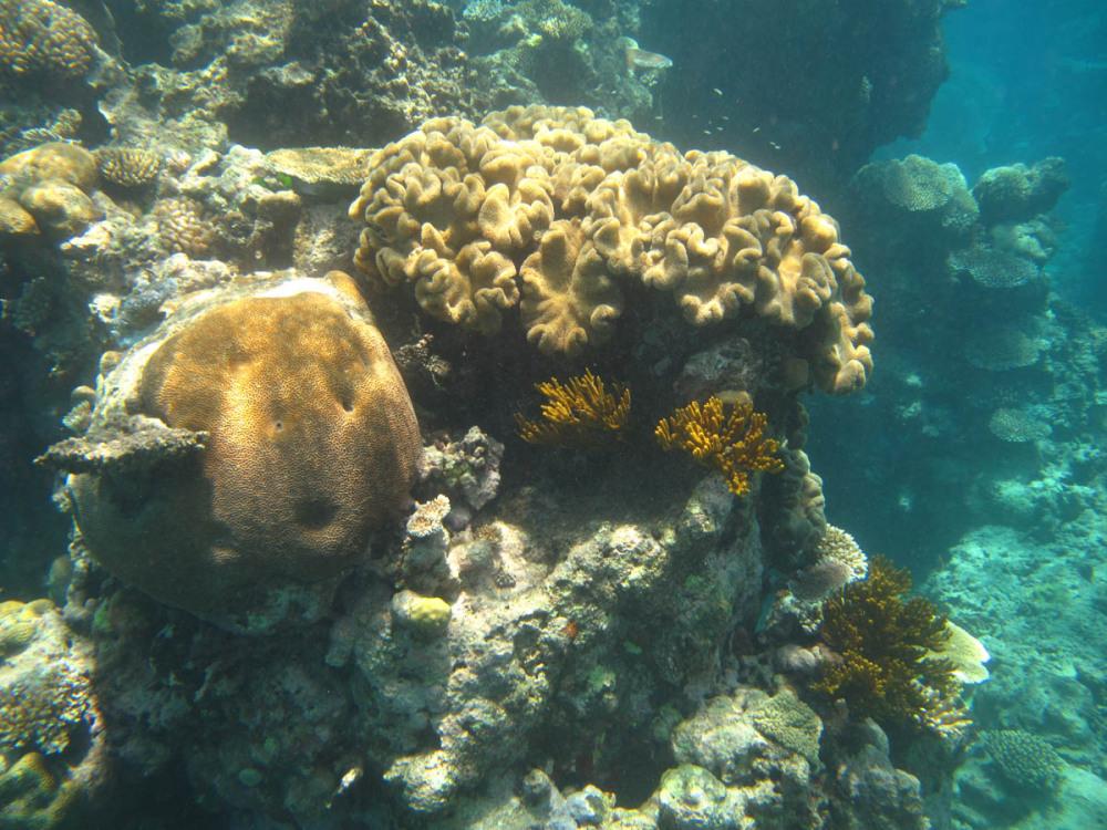 Great Barrier Reef - Under Water World 9/18