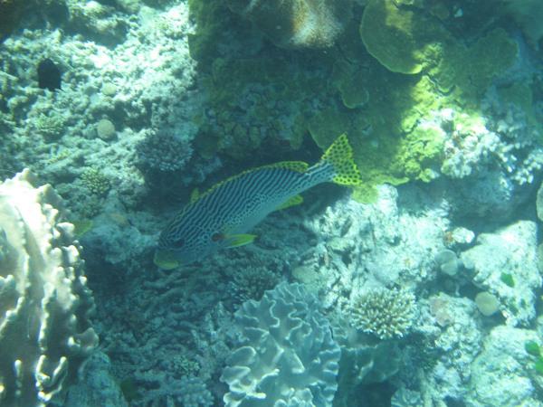 Great Barrier Reef - Under Water World 11/18
