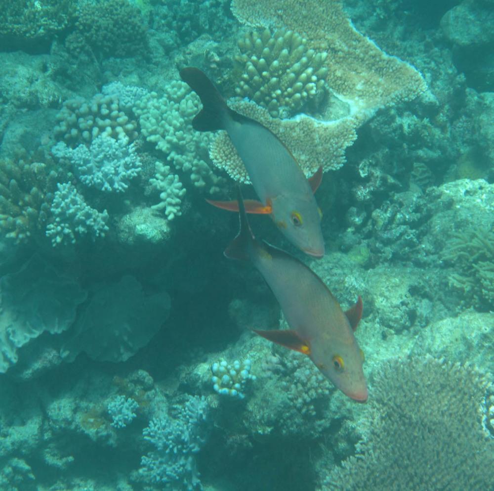 Great Barrier Reef - Under Water World 12/18