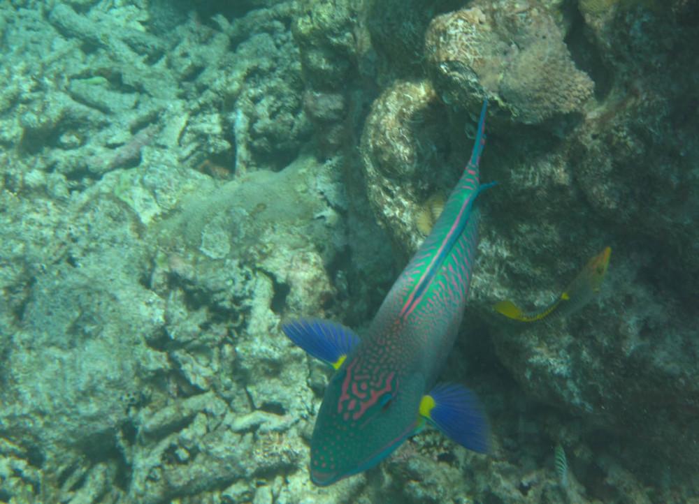 Great Barrier Reef - Under Water World 17/18