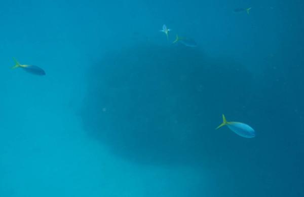 Great Barrier Reef - Under Water World 18/18