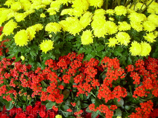 Flowers, Jurong Bird Park, Singapore
