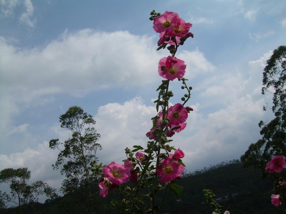 Flower Garden, Munnar, Kerala