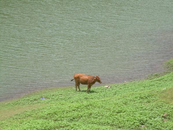 Lake, Munnar, Kerala