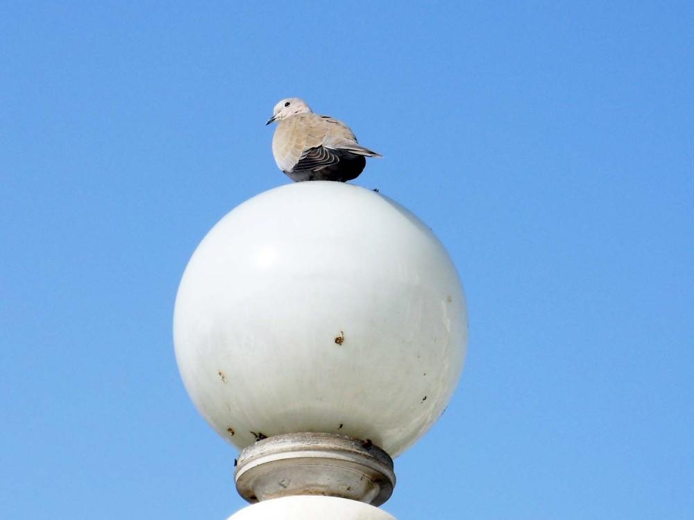 Bird, Birlamandir, Jaipur, India