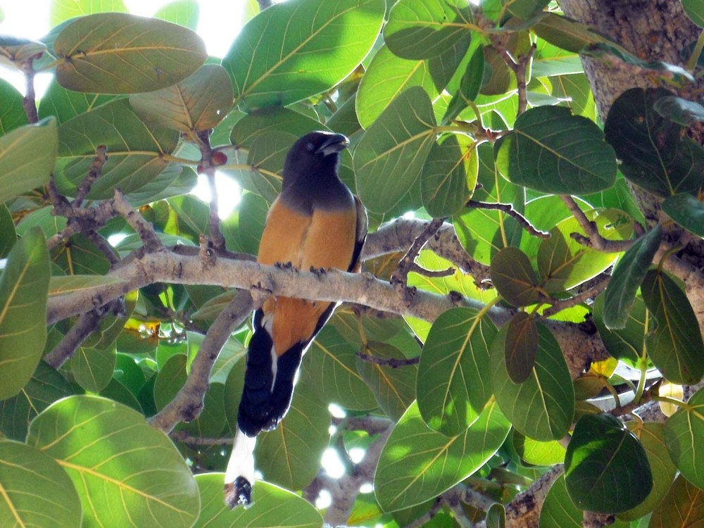 Bird, Jaipur, India