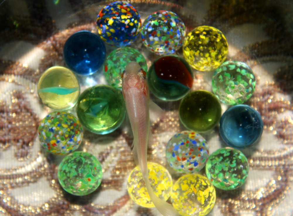 Fish & Marbles