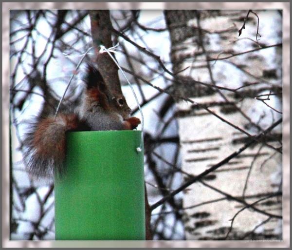 ST, Finland,animals,squirrels