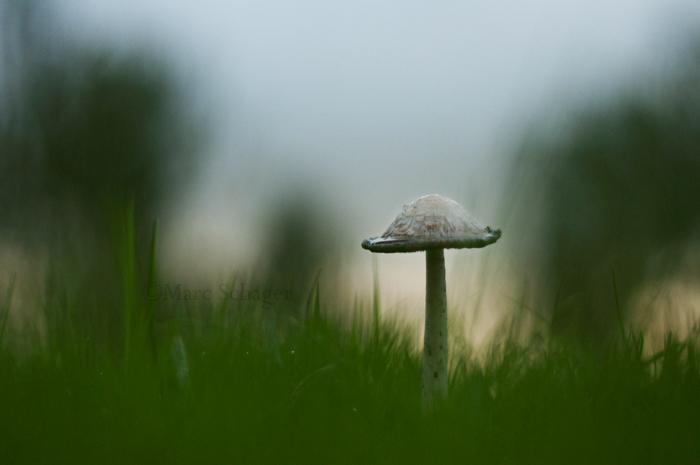 Ink Mushroom