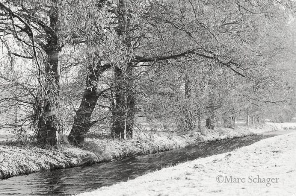 snow, monochrome, holland, trees