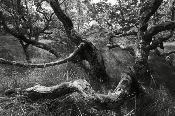 tree, nature, monochrome