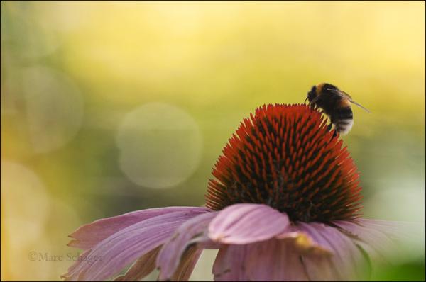 Bumblebee (1/2)
