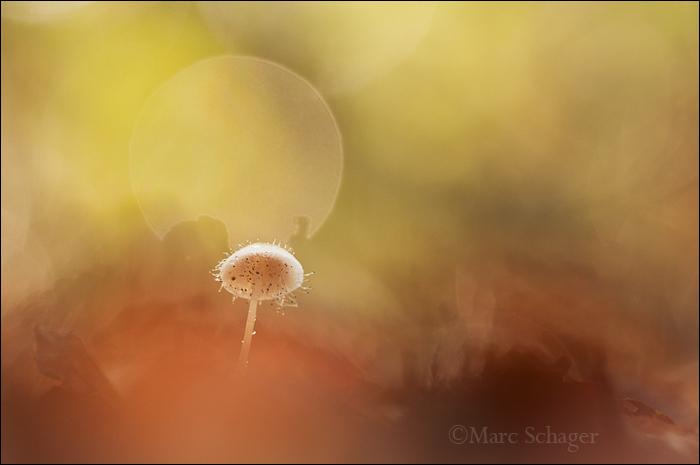 mushroom (2/8)