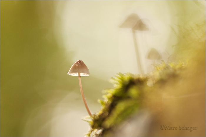 mushroom (3/8)