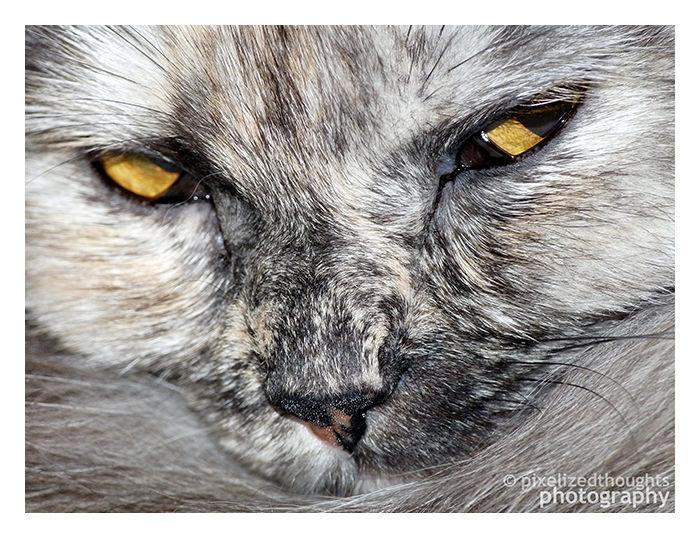 Scheming Cat