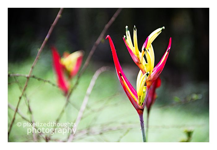 Wild Flowers No.2
