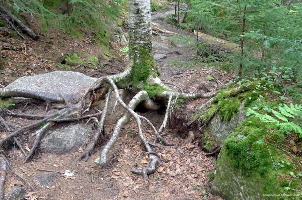 Forêt en marche