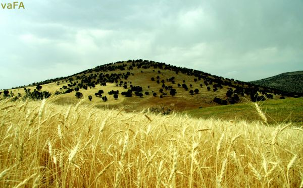 Mountain Farm.Iran