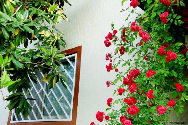 House & Flowers.Iran
