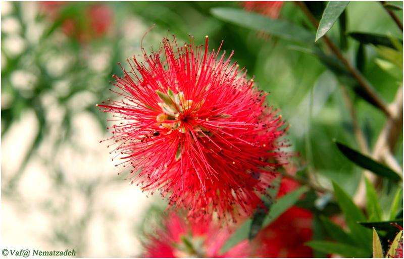 Ant & Flower