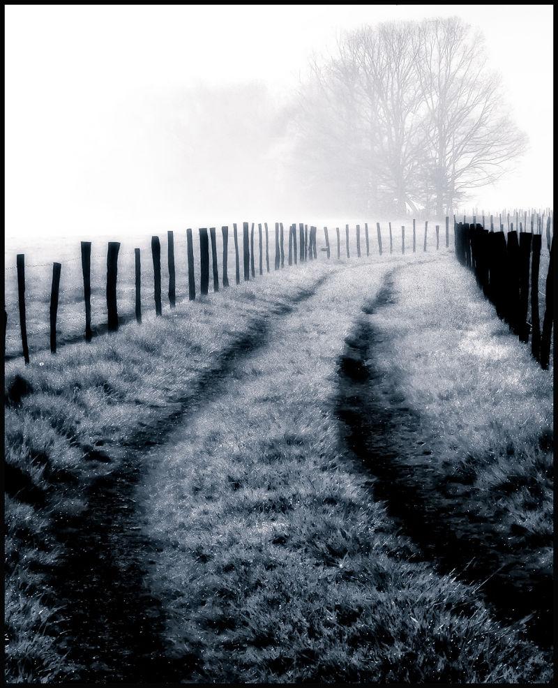 fog on wagon path in cades cove