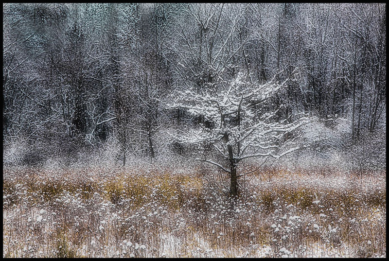 Snowfall in a woodland setting