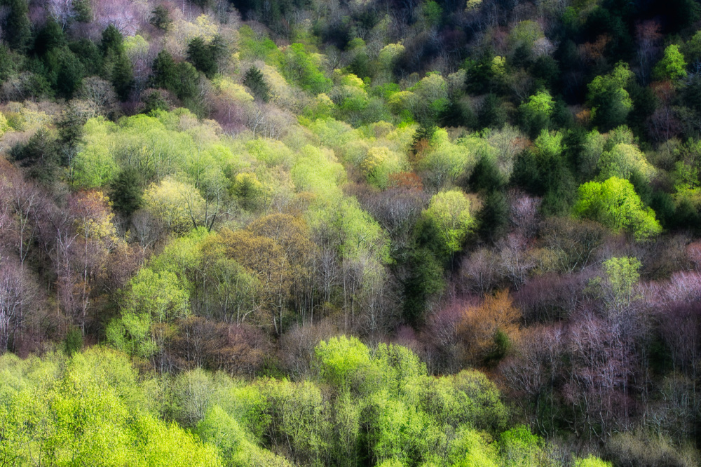 Spring color in the Smoky Mountains
