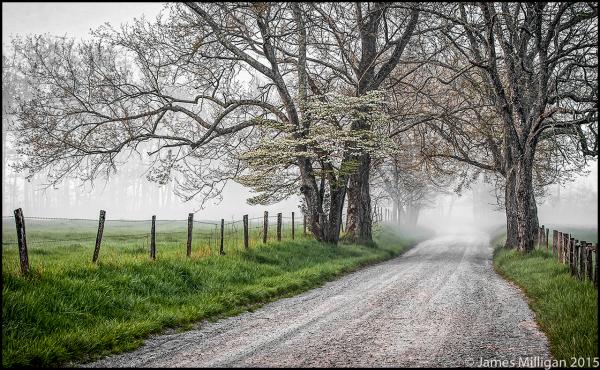 Sparks Lane early morning fog