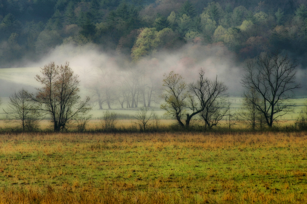 morning fog in meadow in Cades Cove,TN