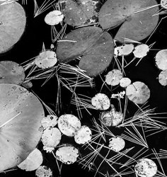 A collection of falling vegetation in a lily pond.