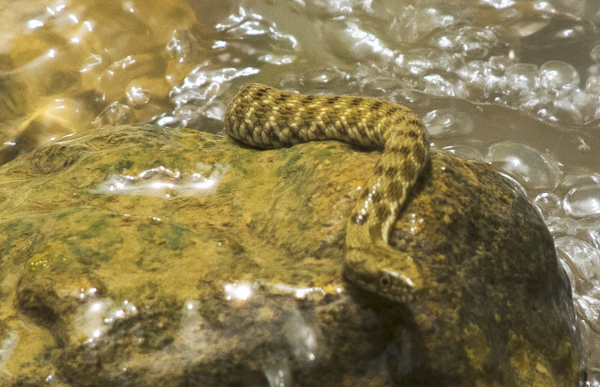 Snake , Nature