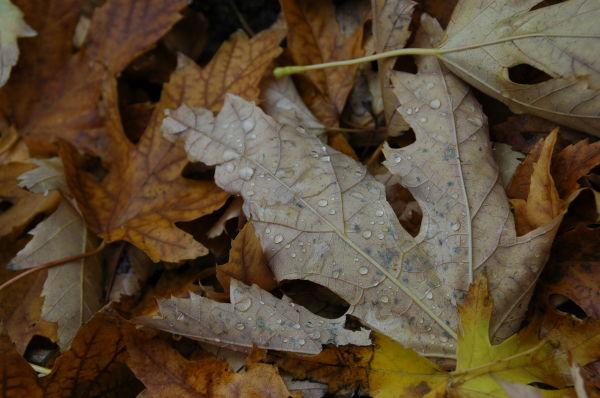 Autumn rain...