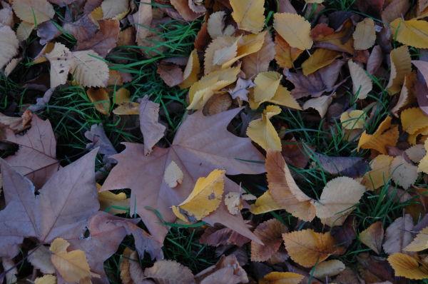 Autumn leaves again...