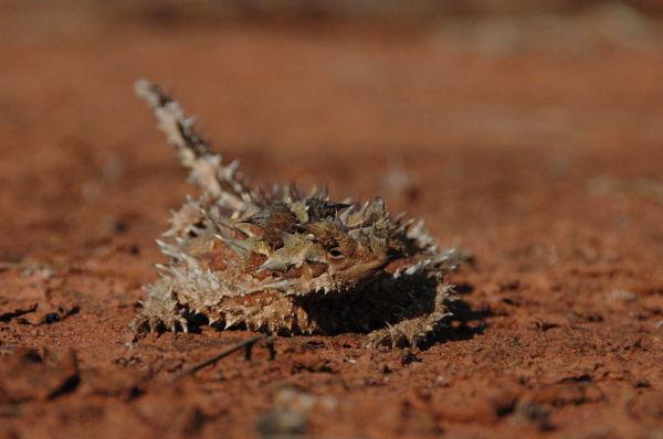 Central Australia #15