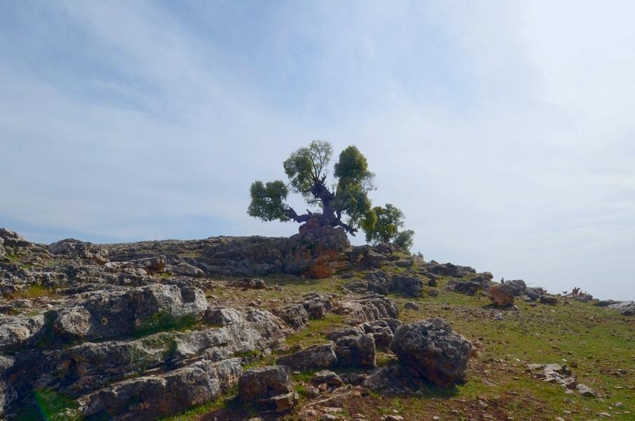 l'arbre fantôme