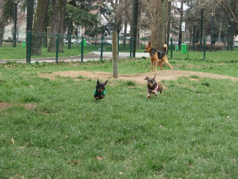 al parco con gli amici