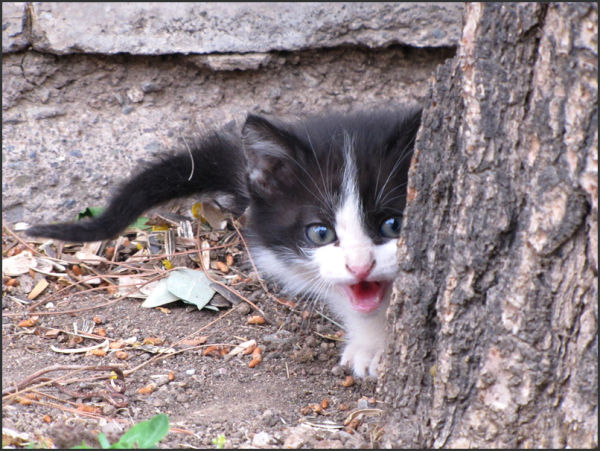 گربه cat