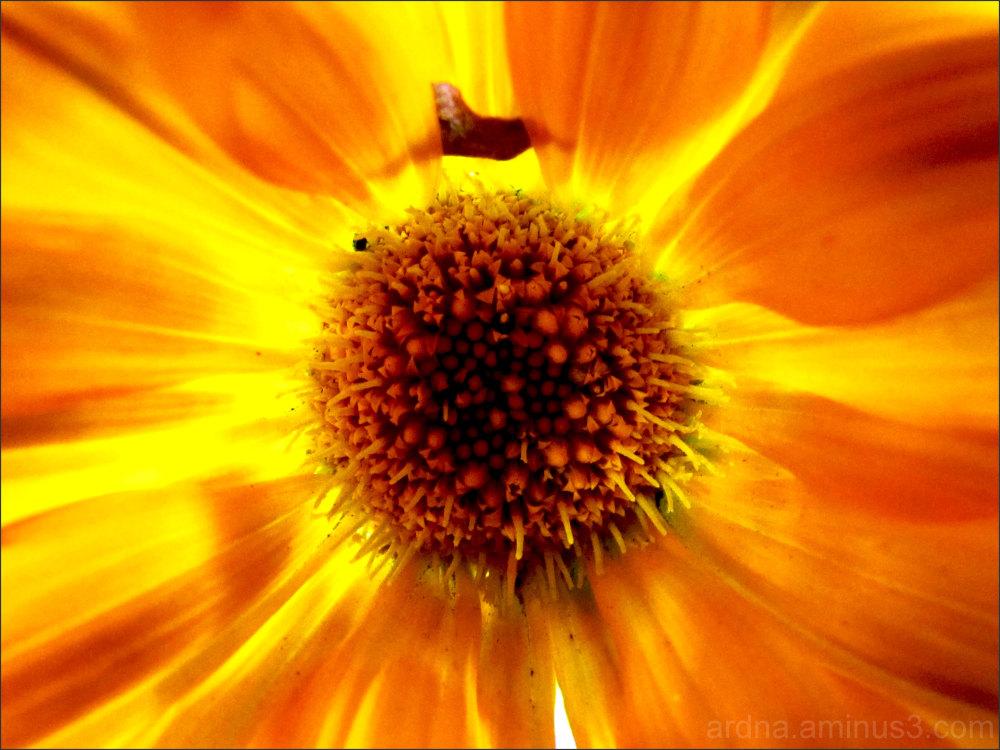 Light in flower