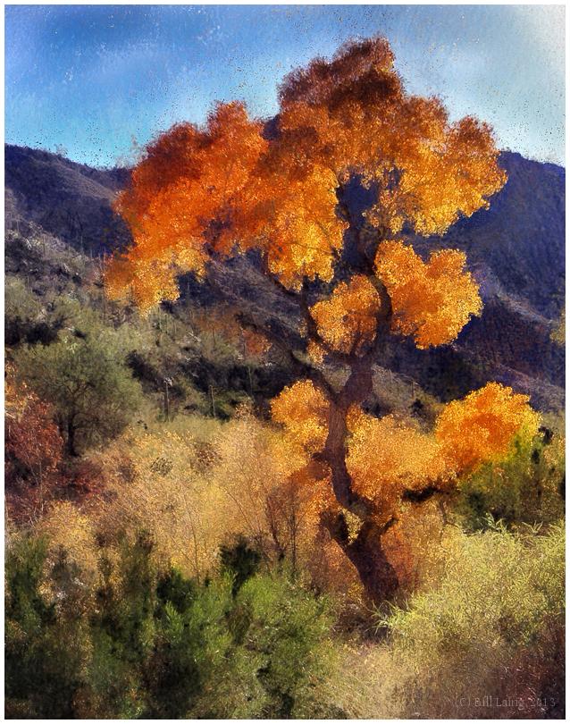 Fall Color, Sabino Canyon Trail, Tucson, AZ