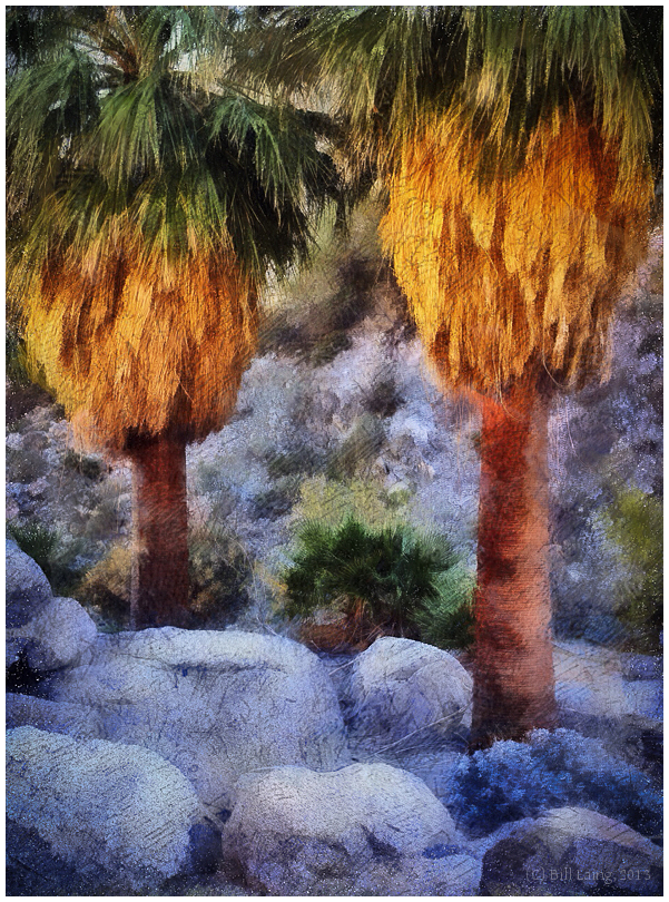 Palms, Hellhole Canyon, Borrego Springs, CA