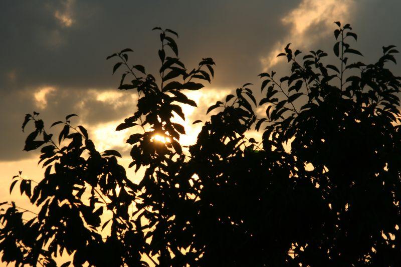 Silhouette Sun