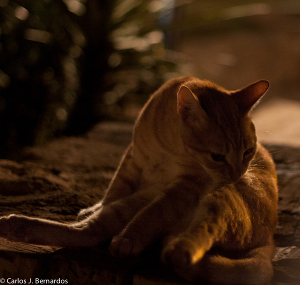 Cat at night in Tel-Aviv