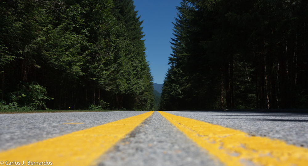 Vancouver road in the forest