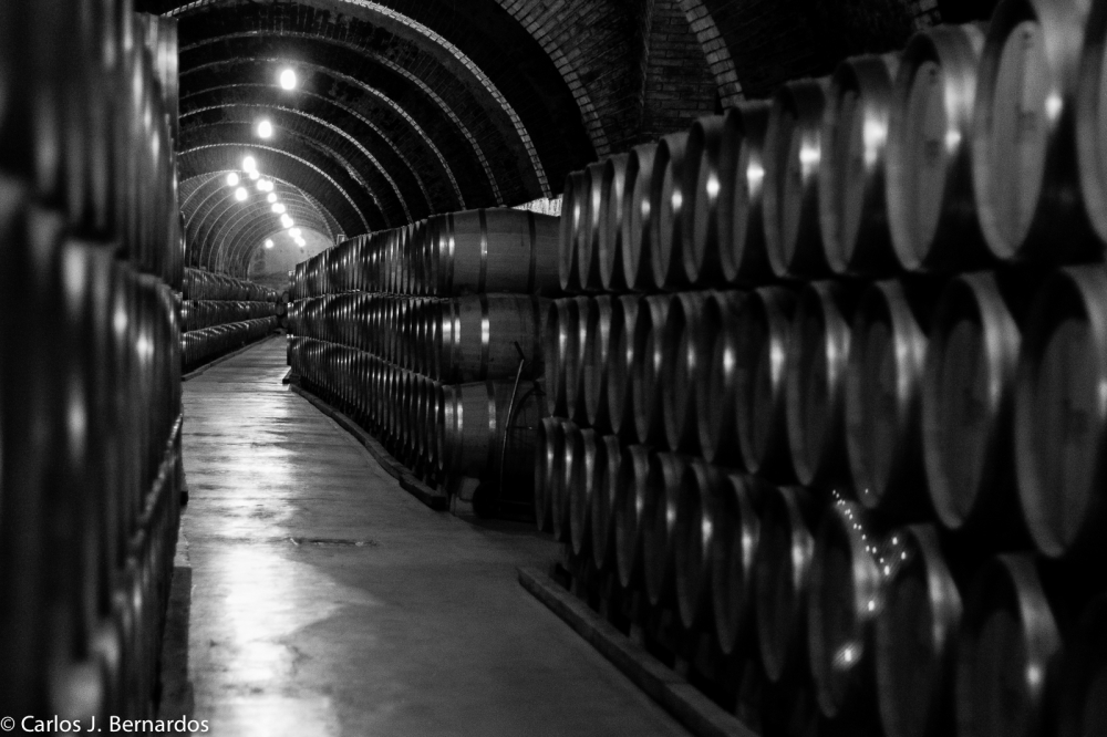 Oak barrels (Protos winery)