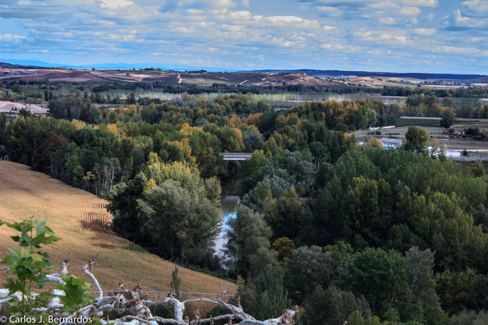 Ribera del Duero landscape