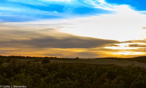 Ribera del Duero landscape at dusk