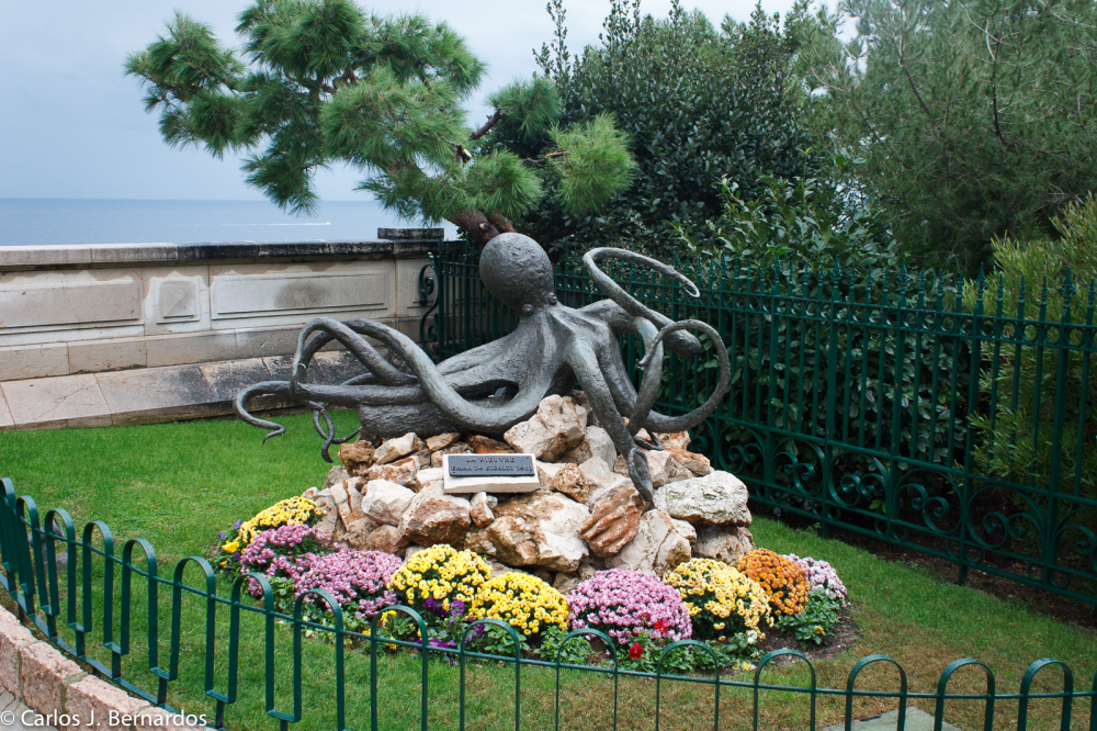Octopus at Montecarlo park