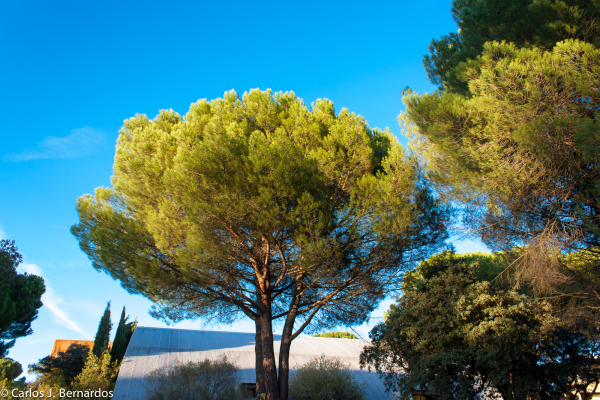 Trees and sky from Madrid