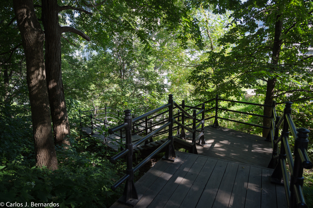 Mont Royal (Montreal, Canada)